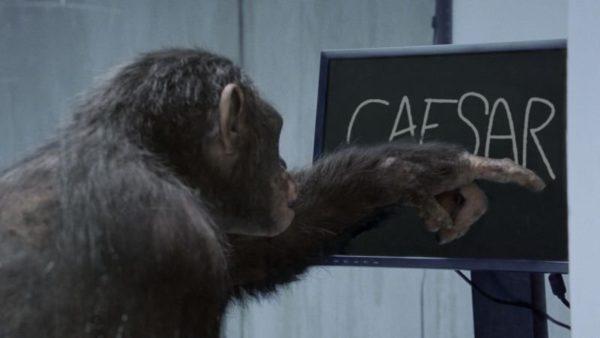 ดูหนัง กำเนิดพิภพวานร Rise of the Planet of the Apes